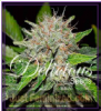 Delicious Deep Mandarine Fem 5 Marijuana Seeds